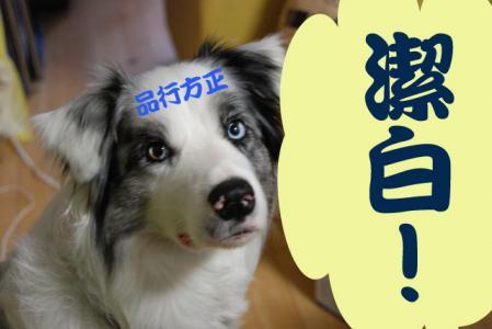 hokaido_81.jpg