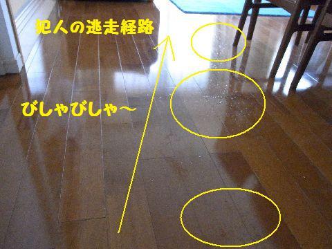 RIMG7602-1.jpg
