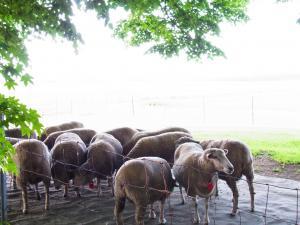 20110707羊