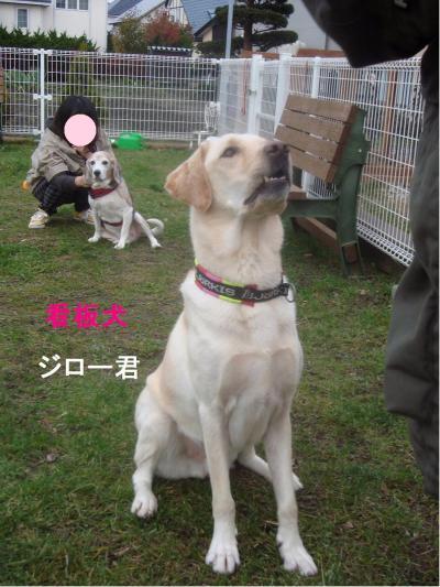 DSC02982+・コ・具セ滂スー1(縺ヲ縺後″1)_convert_20111029134312