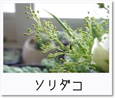 [photo]カゴアレ_ソリダコ