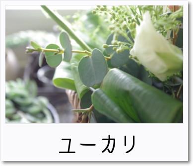 [photo]カゴアレ_ユーカリ