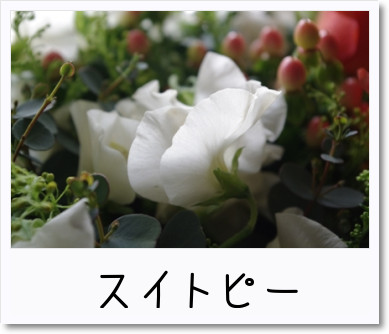 [photo]カゴアレアレ_スイトピー