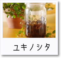 [photo]チンキ_ユキノシタ