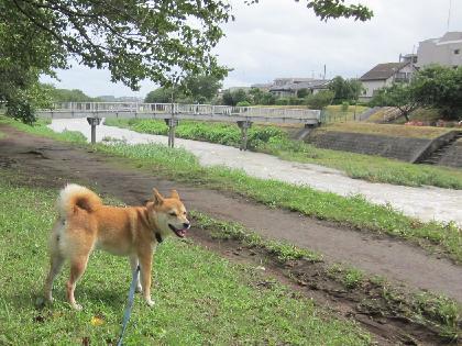 2011台風4