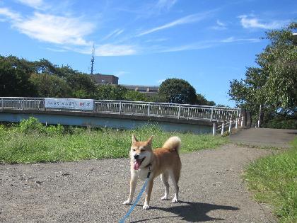2011晩夏4