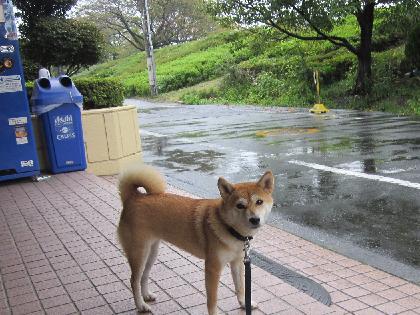 2011秋雨2