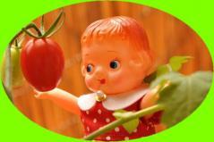 0702 みーこフルーツトマト