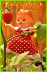 0702 みーこちゃん、まっかトマト