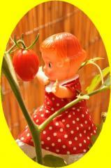 0702 みーこ横顔トマト