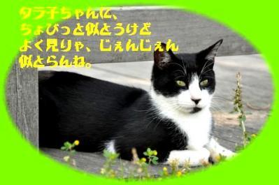 819タラ子もどき猫ちゃん