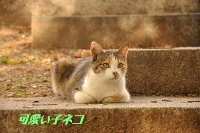 095可愛い子ネコ