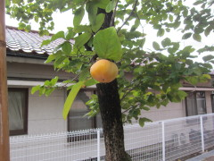 2011_09_22a.jpg