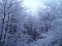 森の様子 091130