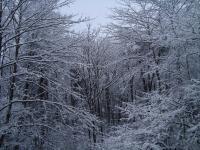 12月11日 雪の森の様子