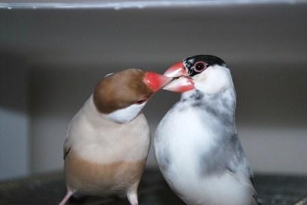 蓮斗ふぶき夫婦