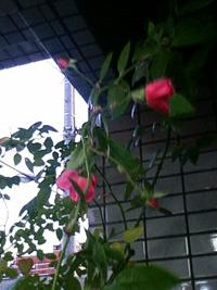 010119_165056_20110119184206.jpg