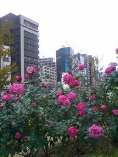 nakanosima+garden_mini.jpg