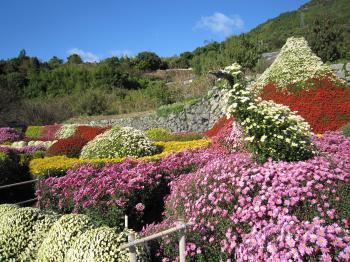 菊花園ブログ