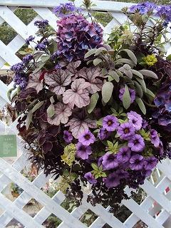 紫なハンギング
