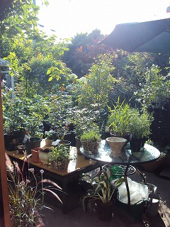 e-gardenの夕暮れ