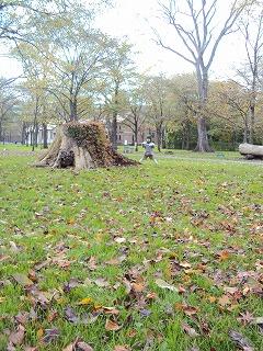 芝生にも落ち葉。