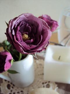 久しぶりに買ったバラ