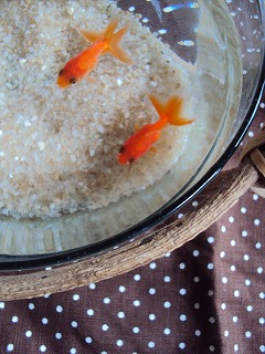 癒しの金魚