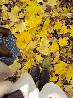 大きな落ち葉の道
