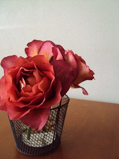 レオニダス?の様な薔薇