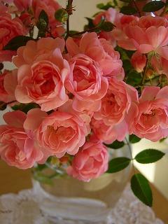 母の秋薔薇