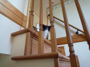 階段ももP1010060_convert_20091231105100