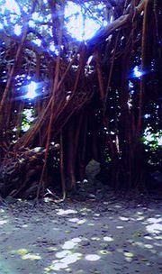びせのふくぎ並木。木漏れ日がきれい。
