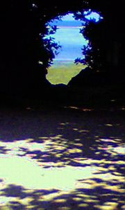 森の向こうには青い海がみえる