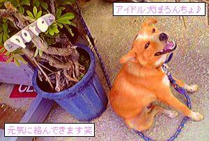 犬は苦手だけどぽろは大好きです笑