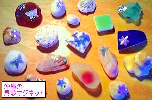沖縄の貝殻まぐねっと