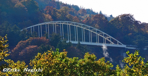 紅葉に浮かぶ白い橋