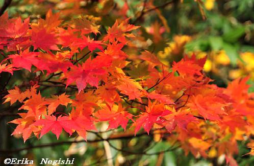 秋が染めにし