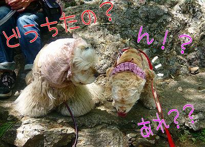 アメコカ登山隊♪ 岐阜城を攻める 【1】