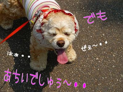 久々の公園散歩~♪