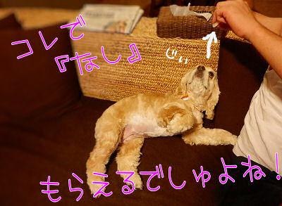 残暑見舞い(?)届きました!!