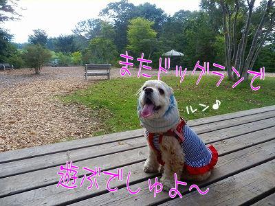 秋旅行 ・☆ドッグラン☆・