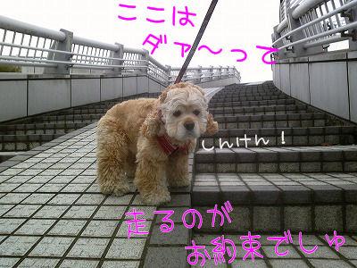 SBSH0338.jpg