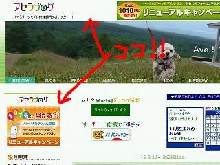 snap_avemarimari_2009116233327.jpg