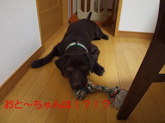P9190423-2.jpg