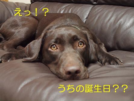 PA171432-2.jpg