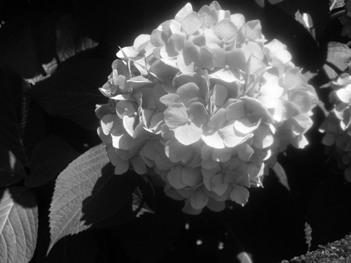 flower 061710