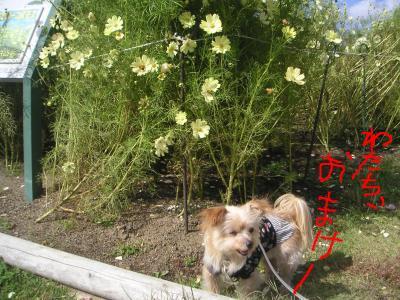 snap_azuazu39_2009104184354.jpg