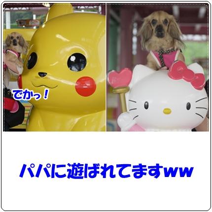 cats_20110516222430.jpg