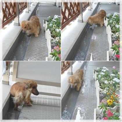cats_20110709185019.jpg